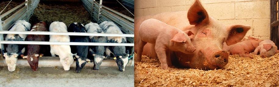 Nieuwsbrief Melkvee- en Varkensbedrijf Najaar 2015 – Gistproducten